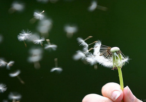 Lời hứa gió bay: Giá trị của một lời hứa